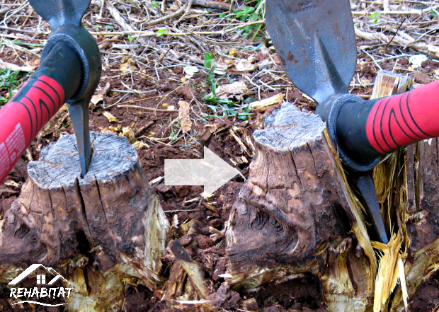 Stump Removal Axe Best Way To Remove A Clutch